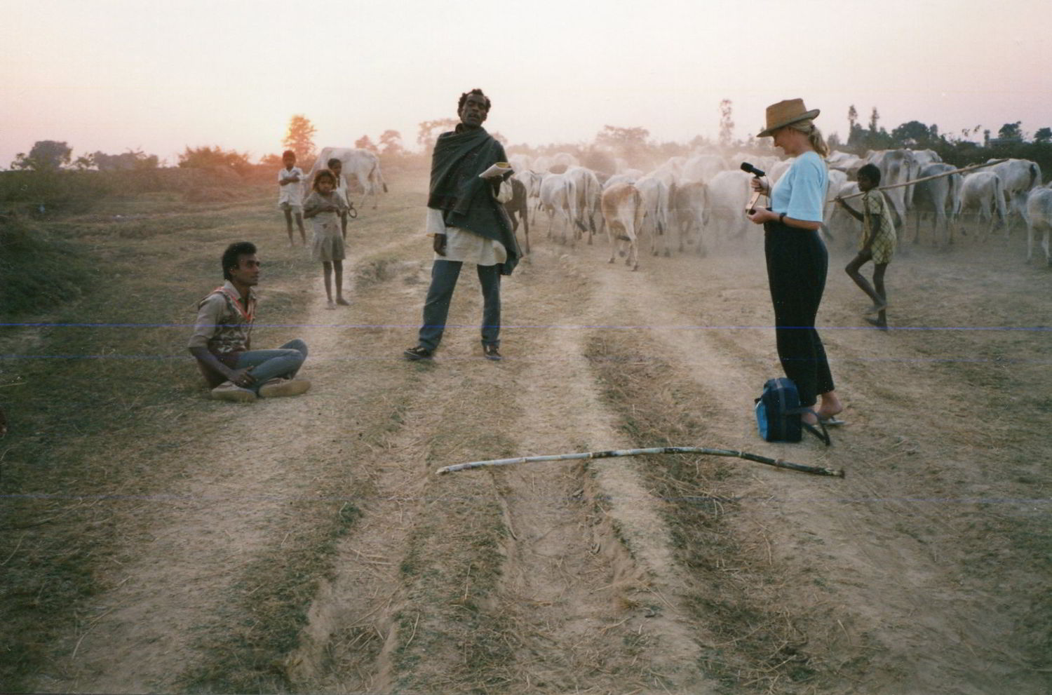 cattle with agricultural workers being photographed by an Australian woman