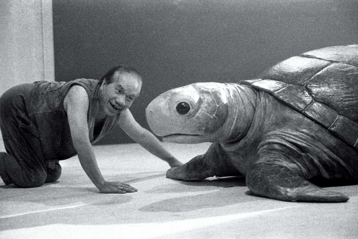 Miss Tanaka Handspan/Playbox production - man crawls towards large lifelike turtle puppet